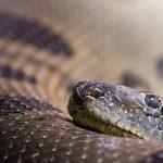 El misticismo de la Simbología de la Serpiente